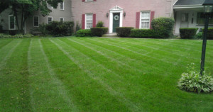 Lawn-Care-Maintenance-Fertilization-Weed-Control-Fall-Core-Aeration